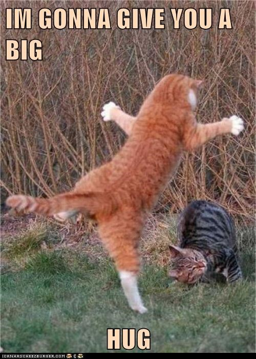 Im Gonna Give You A Big Hug Lolcats Lol Cat Memes Funny