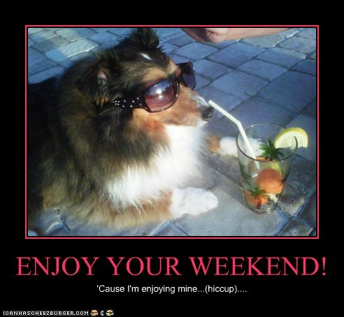 Enjoy Your Weekend I Has A Hotdog Dog Pictures Funny