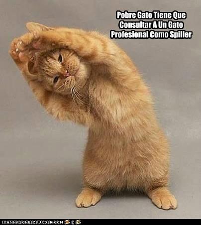 La Mejor Ayuda Para Un Gato Lolcats Lol Cat Memes Funny