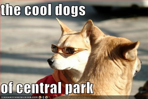 The Cool Dogs Of Central Park Cheezburger Funny Memes Funny