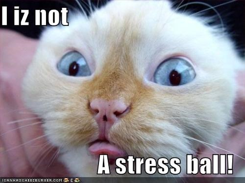I Iz Not A Stress Ball Cheezburger Funny Memes Funny Pictures