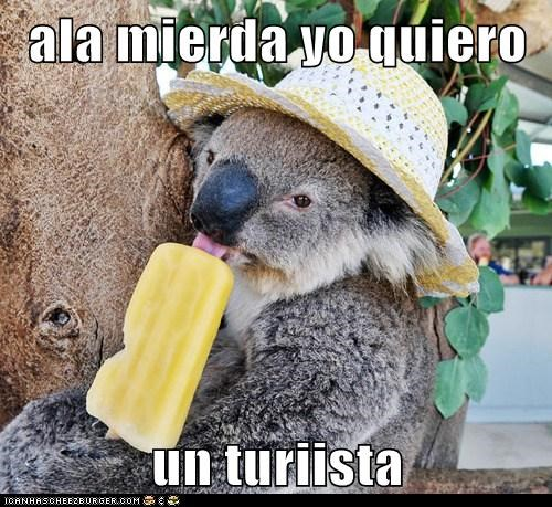 Ala Mierda Yo Quiero Un Turiista Animal Comedy Animal Comedy Funny Animals Animal Gifs