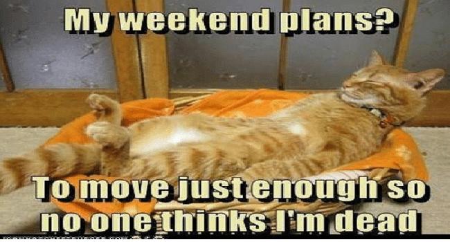 I Can Has Cheezburger Weekend Funny Animals Online Cheezburger