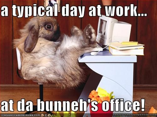 A Typical Day At Work At Da Bunneh S Office Cheezburger