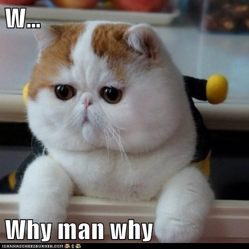 W Why Man Why Lolcats Lol Cat Memes Funny Cats Funny