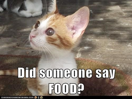 Did Someone Say Food Lolcats Lol Cat Memes Funny Cats