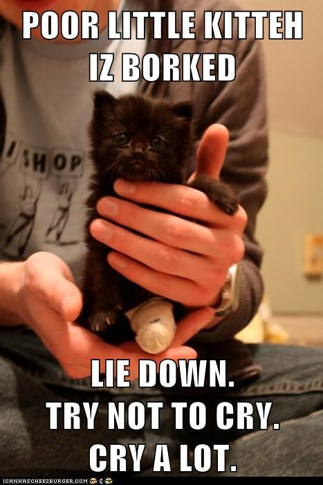 Cat Died Near My House Meme By Born4sin14 Memedroid