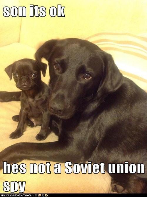 Son Its Ok Hes Not A Soviet Union Spy I Has A Hotdog Dog