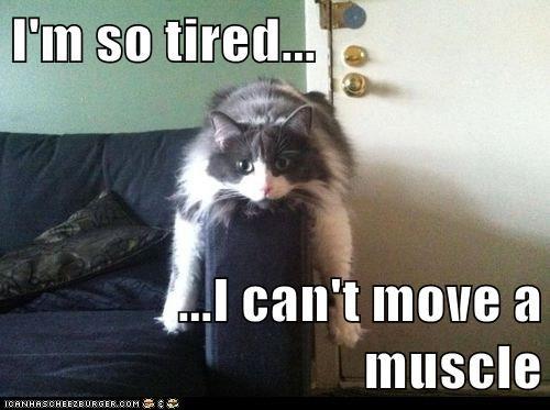 I M So Tired Lolcats Lol Cat Memes Funny Cats Funny