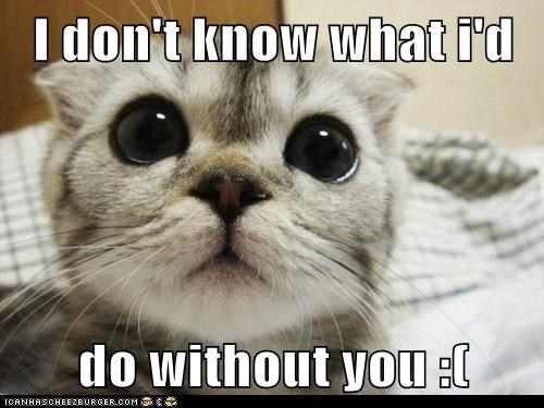 I Don T Know What I D Do Without You Lolcats Lol Cat