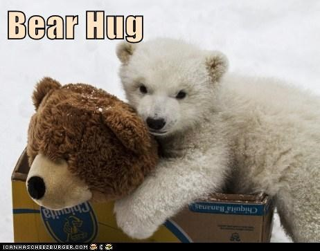 So Cute I Can Bearly Stand It Animal Comedy Animal Comedy