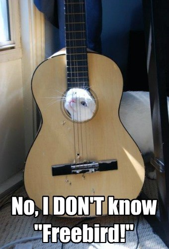 Lolcats Guitar Lol At Funny Cat Memes Funny Cat Pictures