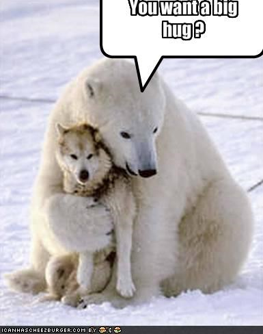 You Want A Big Hug Cheezburger Funny Memes Funny Pictures