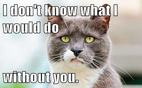 I Don T Know What I Would Do Without You Lolcats Lol Cat
