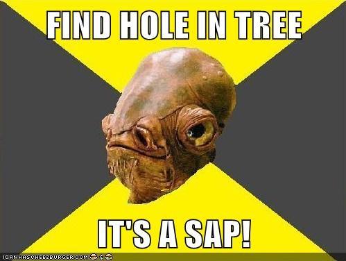 Find Hole In Tree It S A Sap Memebase Funny Memes
