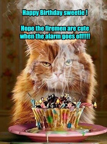 Funny Birthday Card Cool Cat Birthday Card Pun Birthday Etsy