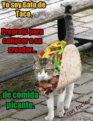 Yo Soy Gato De Taco Lolcats Lol Cat Memes Funny Cats