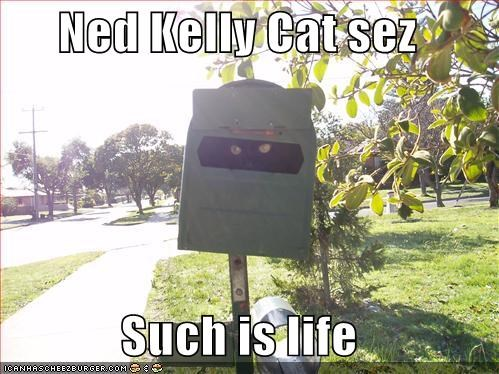 Ned Kelly Cat Sez Such Is Life Cheezburger Funny Memes Funny