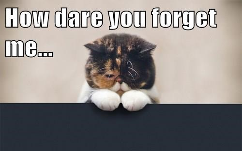 How Dare You Forget Me Cheezburger Funny Memes Funny Pictures