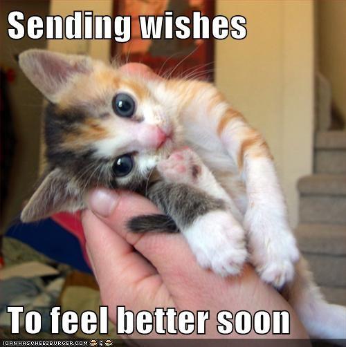 Smiling Cat Memes Imgflip