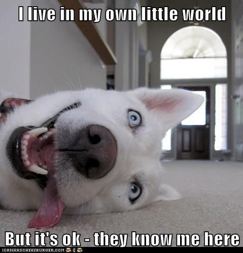 I Live In My Own Little World But It S Ok They Know Me Here I