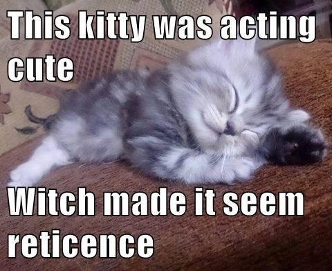 This Kitty Was Acting Cute Witch Made It Seem Reticence Lolcats