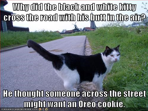 Why Did The Black And White Kitty Cross The Road With His Butt In