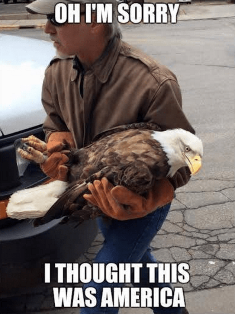 Memebase Eagle All Your Memes In Our Base Funny Memes