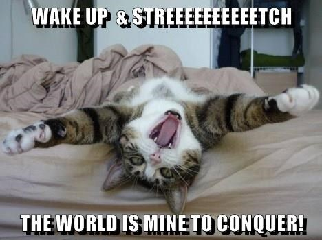 Lolcats Wake Up Lol At Funny Cat Memes Funny Cat Pictures