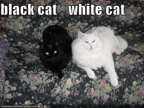 Black Cat White Cat Cheezburger Funny Memes Funny Pictures