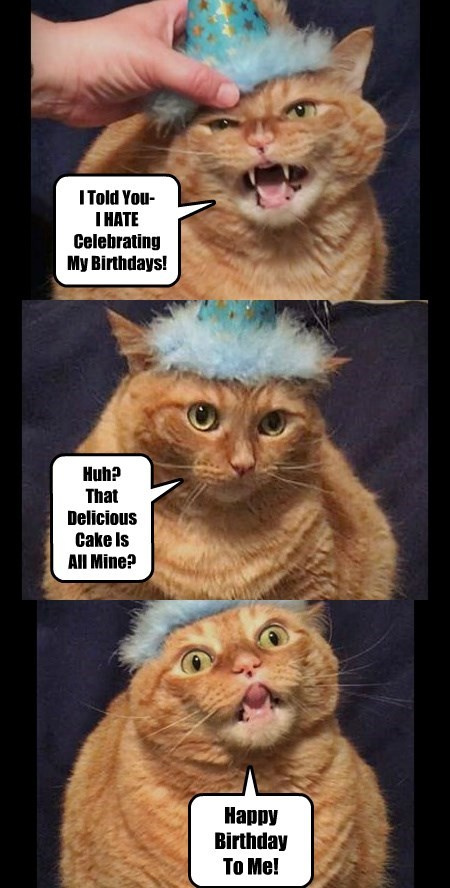 Lolcats Birthday Lol At Funny Cat Memes Funny Cat Pictures With Words On Them Lol Cat Memes Funny Cats Funny Cat Pictures With Words On