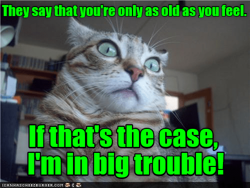 Need Cheering Up These Coughing Cat Memes Will Make Your Day Film Daily
