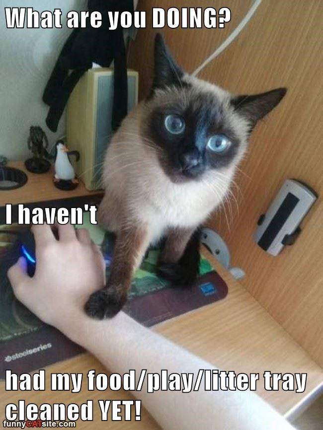 What Are You Doing Lolcats Lol Cat Memes Funny Cats