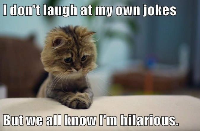 Lolcats   jokes   LOL at Funny Cat Memes   Funny cat pictures with     hilarious cat jokes laugh dont caption   9021134848