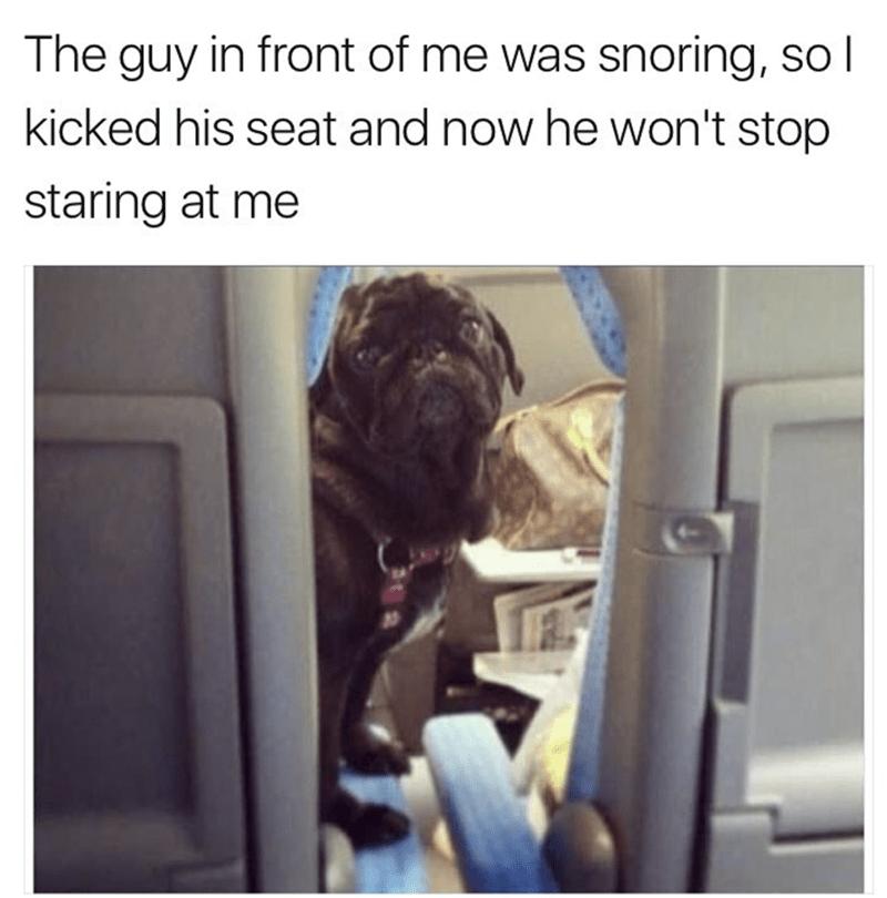 Unilad Dog Holds Husband S Hand In Front Of Car Facebook