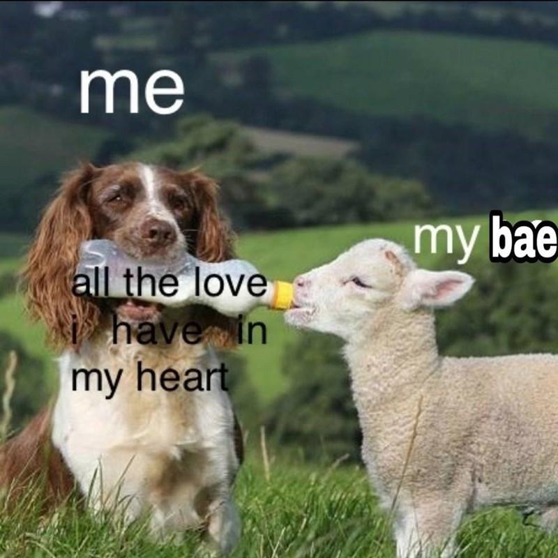 17 Romantic Memes You Should Send To Your Crush Memebase Funny