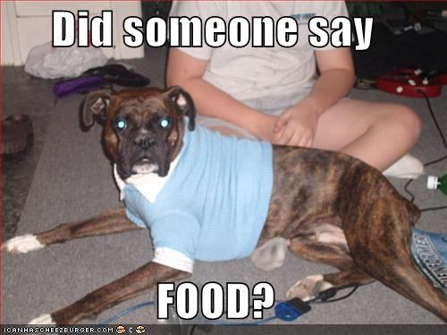 Did Someone Say Food Cheezburger Funny Memes Funny Pictures