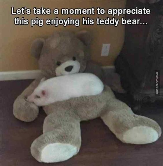 15 Teddy Bear Memes That Are Cute And Funny At The Same Time I
