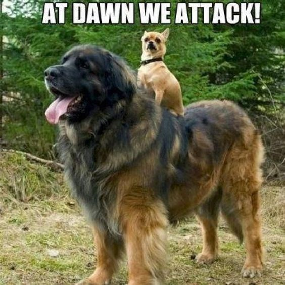 Dog Sitting On Another Dog Funny Dogs Funny Dog Pictures