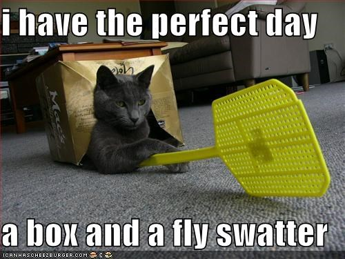 I Have The Perfect Day A Box And A Fly Swatter Cheezburger