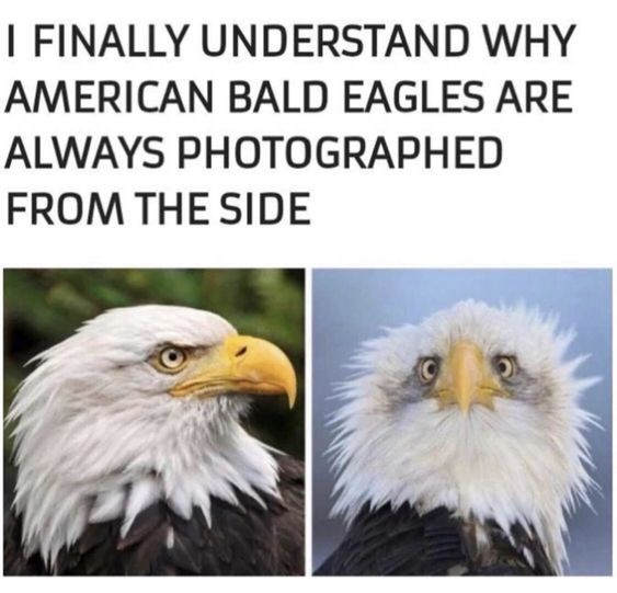 It S American Eagle Day So Feel Free To Enjoy These Majestic Memes