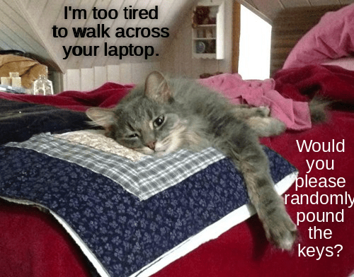 Lolcats Tired Lol At Funny Cat Memes Funny Cat Pictures With