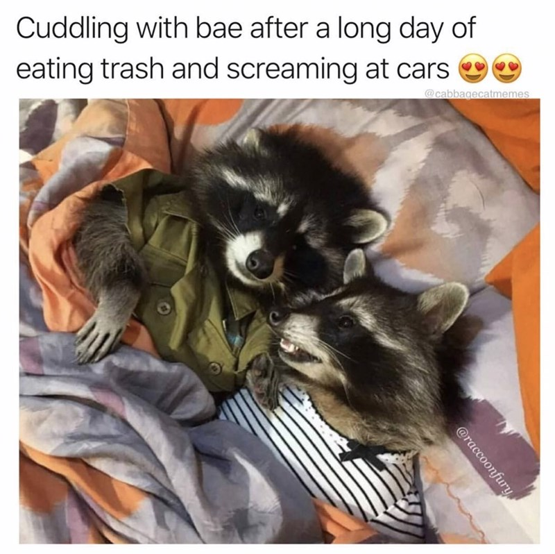 23 Raccoon Memes For Anyone Who Just Loves Those Little Trash