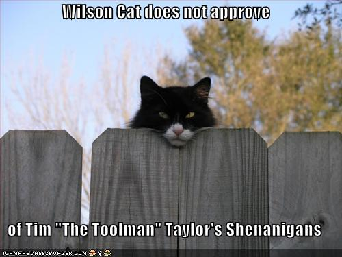 Wilson Cat Does Not Approve Of Tim The Toolman Taylor S