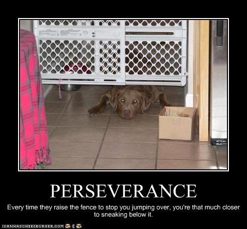 Perseverance Cheezburger Funny Memes Funny Pictures