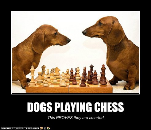 Funny Chess Captions Cool Attitude Captions
