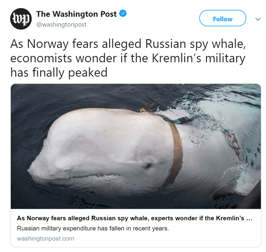 A Whale Wearing Harness Found By Norwegian Fishermen Is Suspected