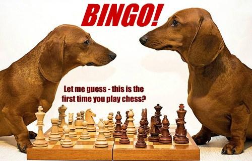 Trump Chess Meme On Imgur