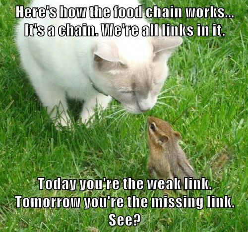 The Food Chain Explained Lolcats Lol Cat Memes Funny Cats