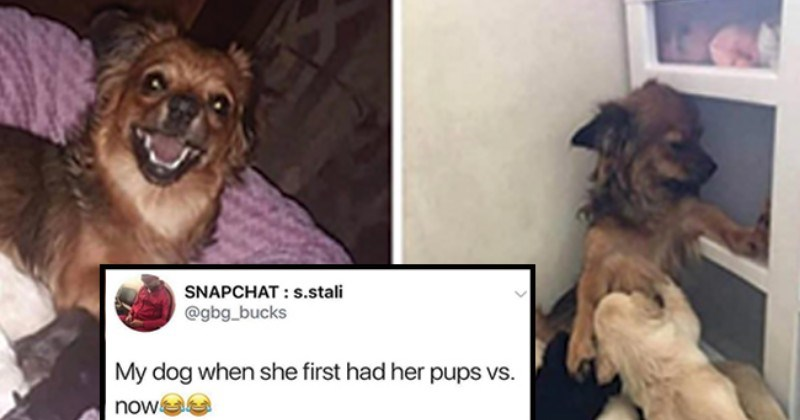 Bring On The Good Times With These 33 Heckin Good Doggo Memes I